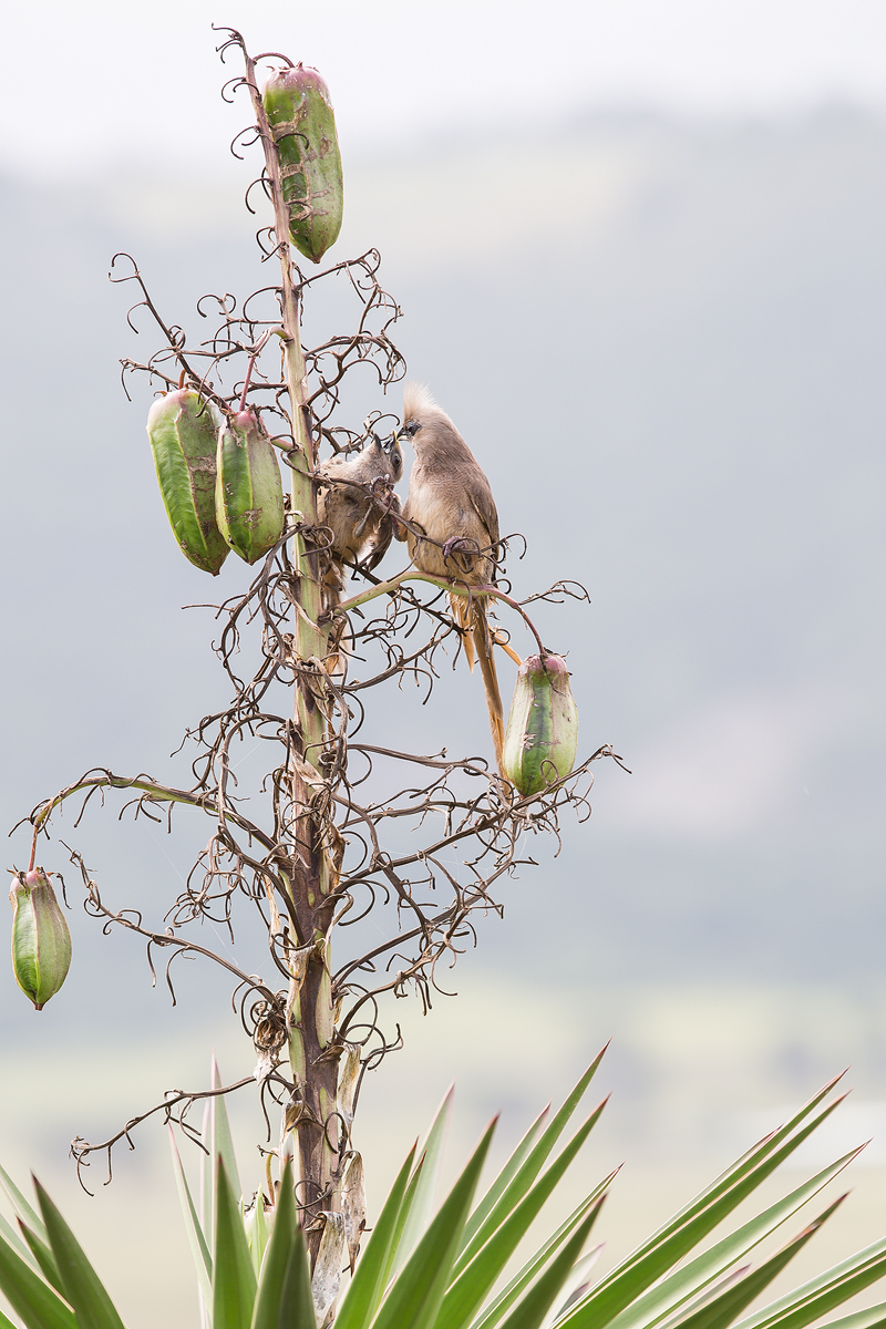 Wilderness-Garden-Route-Birds-South-African